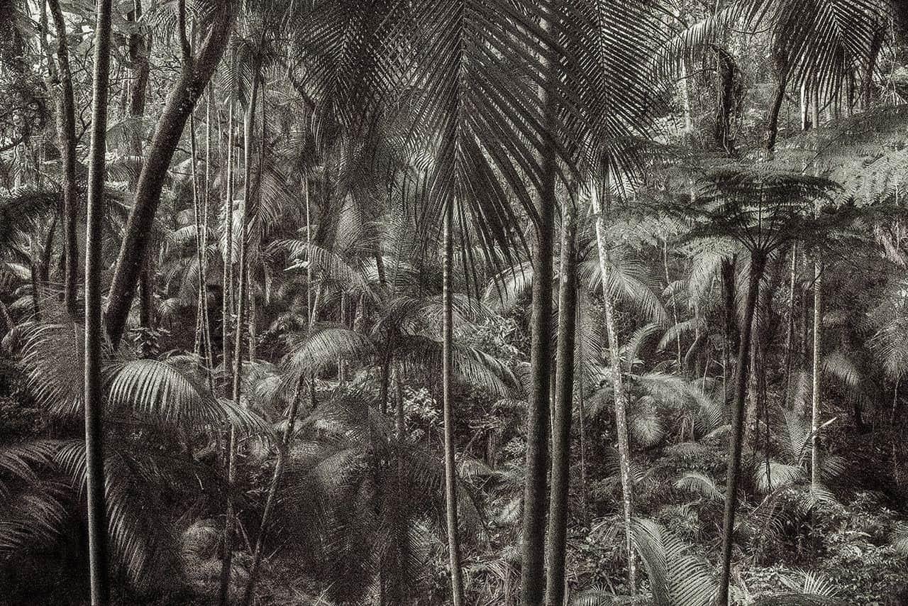 """Série """"Viagem Pitoresca pelo Brasil"""", o mais recente projeto artístico de Cássio Vasconcellos, fotografado em florestas brasileiras com tema inspirado nas pinturas e litografias sobre o Brasil de artistas que chegaram ao País no século 19"""