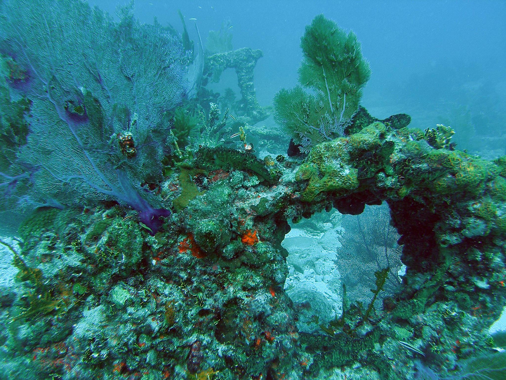 Guia-FFW-Florida-Florida-Keys-Key-Largo-National-Marine-Sanctuary