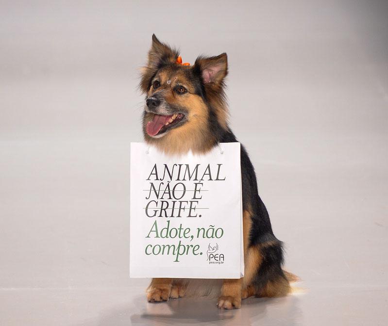 Capitu se tornou a sensação do SPFW ao cruzar a passarela com uma placa da ONG Projeto Esperança Animal (PEA) ©Ze Takahashi/Agência Fotosite